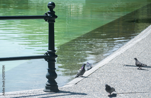 Keuken foto achterwand Olijf Fence detail of ornamental metal elements along the lake in the park with walking pigeons
