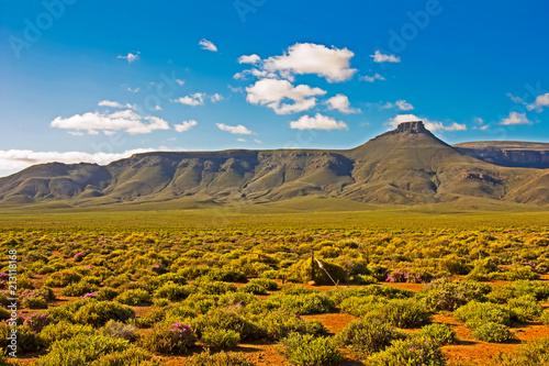Foto op Plexiglas Landschappen Landscape of green mountain in Tankwa Karoo