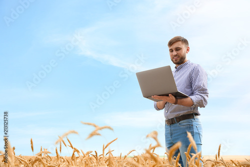 Fototapeta Young agronomist with laptop in grain field. Cereal farming obraz