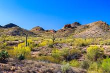 Spring Landscape Arizona's Son...
