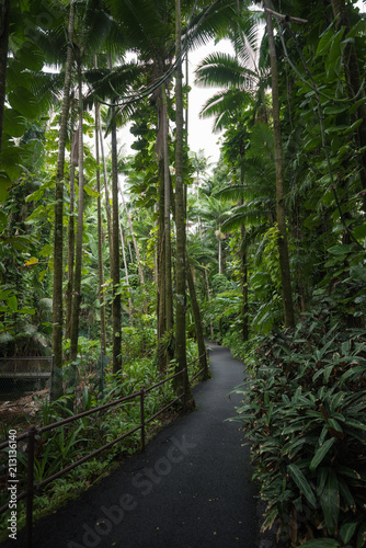 Foto op Canvas Weg in bos Tropical hawaiian jungle with palm trees