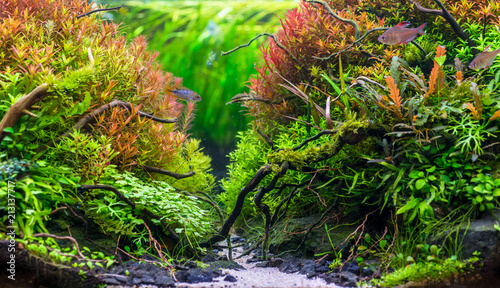 Poster Waterlelies Beautiful nature decoration planted fish tank in freshwater aquarium with fishes