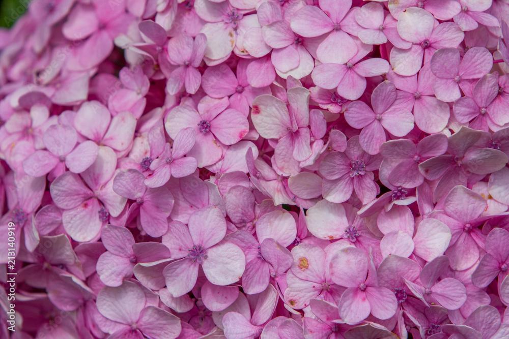 Mixture Of Pink Flower Petals Soft Background Image Flower