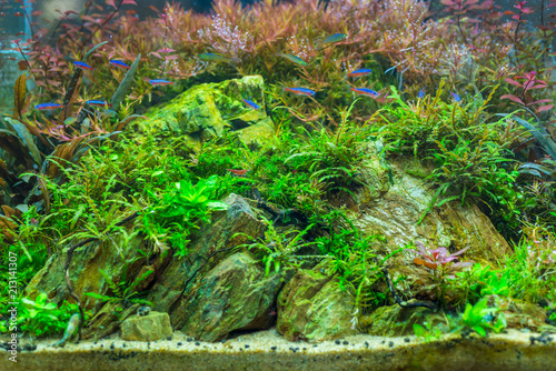 Spoed Foto op Canvas Natuur Beautiful nature decoration planted fish tank in freshwater aquarium with fishes