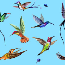 Seamless Watercolor Pattern From Multi-colored Hummingbirds.