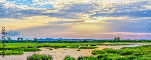 Fényképezés  Panoramic landscape scenery of marsh wetland full of grass with heron looking fo