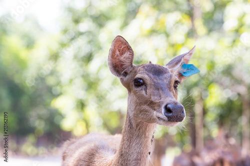 Spoed Foto op Canvas Hert Deer on the farm