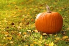 Autumn Season.orange Pumpkin On The Grass In Autumn Leaves At Sunset.Autumn Mood.Autumn Time