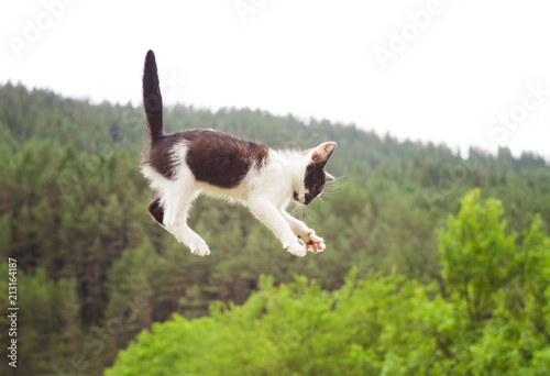 Fotografie, Obraz  cute cat flying and falling in the nature. closeup