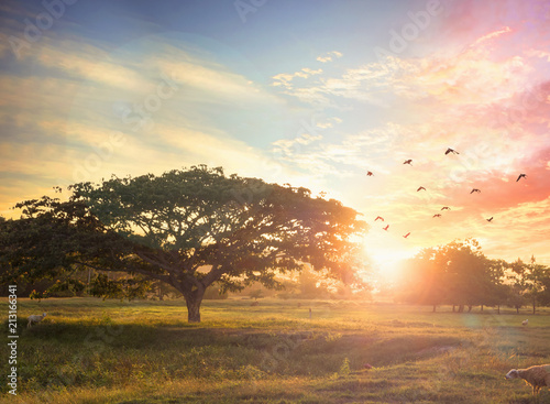 Fotografía  Nature background concept: Alone tree on meadow sunset.