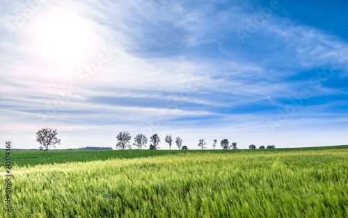 Fotobehang Cultuur Countryside scenery with spring green fields and sky. Trees on field, farm landscape.