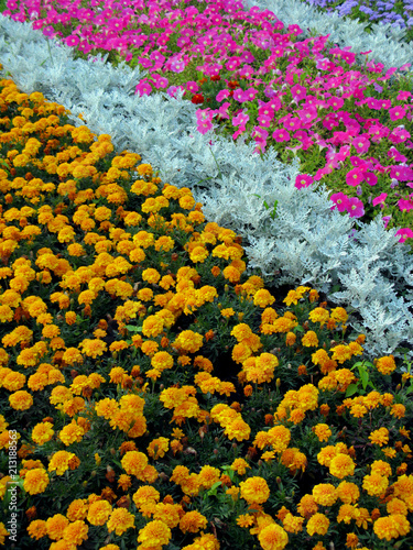 Photo A flower bed, as if painted by an artist's brush, strewn with stripes of flowers of different colorings and species