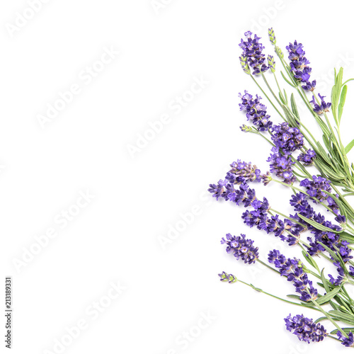 Lavender flowers white background Floral border