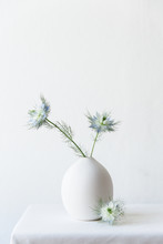White And Subtle Blue Blooming Nigella Flowers In A Small White Vase.