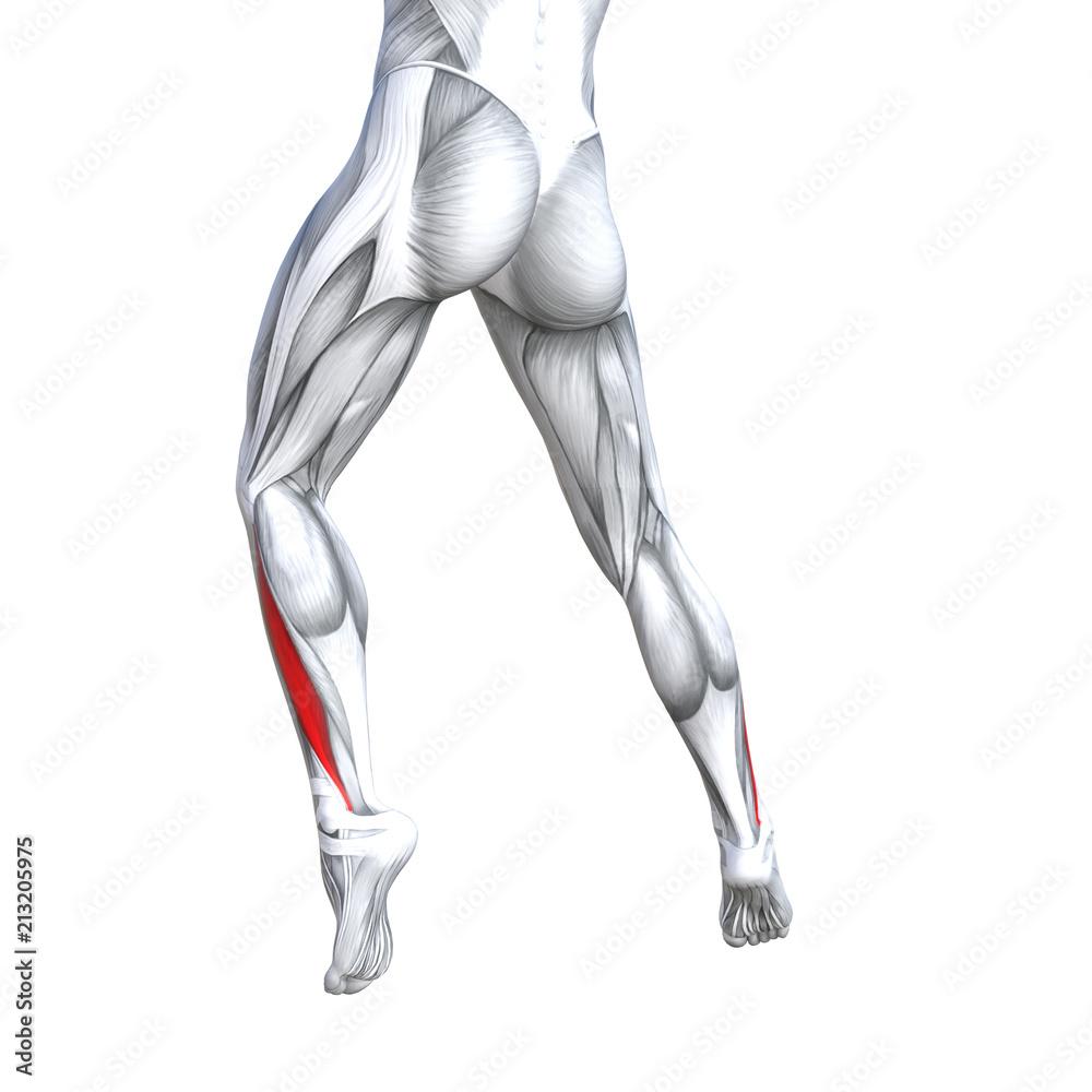 Concept Conceptual 3d Illustration Fit Strong Back Lower Leg Human