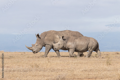 Canvas Prints Rhino White Rhinoceros