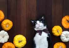 Funny Cute Cat With Pumpkins