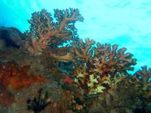 Plongée Philipines