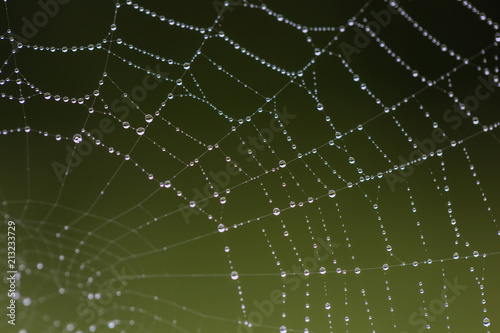 Morning dew on the web. Drops of dew. .