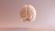 Human Brain Anatomical Model 3...