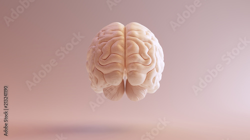 Leinwand Poster Human brain Anatomical Model 3d illustration
