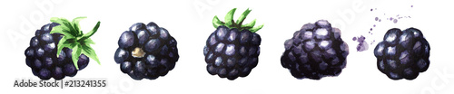Valokuva Ripe blackberries set