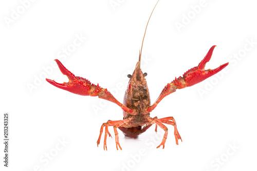 Canvastavla Live crayfish. Crayfish on a white background
