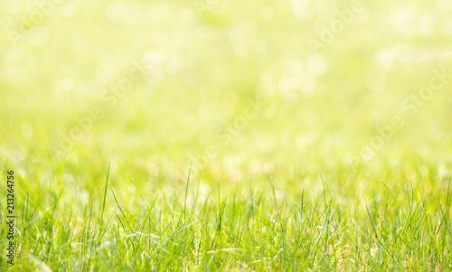 Wiosenne tło z trawą na pierwszym planie. Kolorowe naturalne tło przechodzące w rozmycie.  - fototapety na wymiar