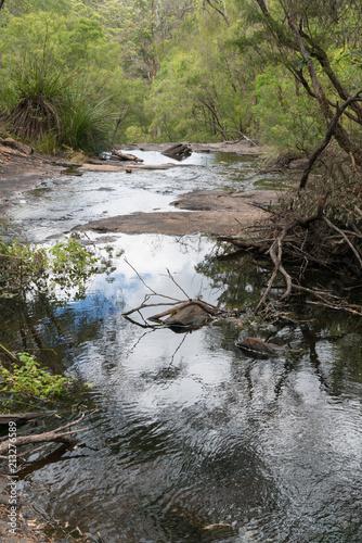 Fotografia, Obraz  Beedelup National Park, Western Australia