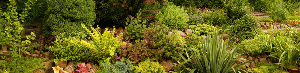 FototapetaPanorama of the garden with various plants, rock garden.
