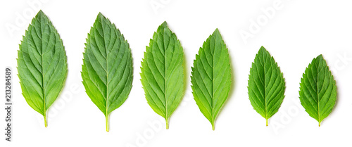 Group of different mint leaves