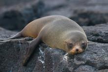 Galapagos Island Wildlife