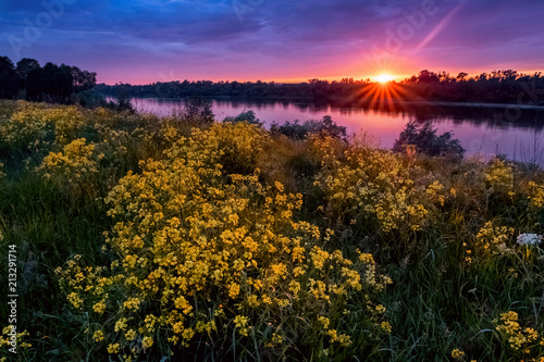 Fotografia, Obraz  Summer sunset landscape with a river and yellow flowers