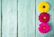 gerbera flower on wooden surface