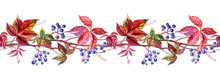 Seamless Border Of Wild Grapes, Watercolor Painting On White Background.