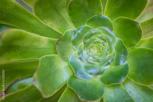 Papiers peints Cactus Green Succulent