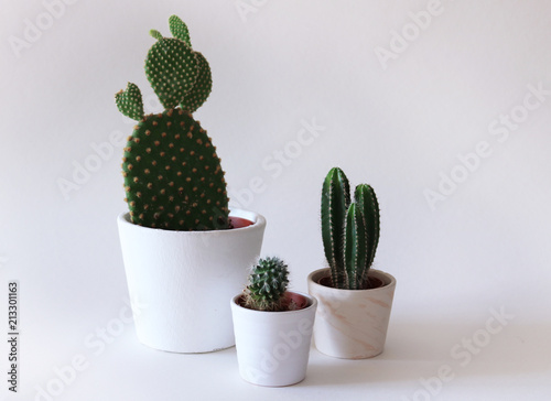 Three cacti in white planters, a bunny ears cactus, a small beehive cactus,