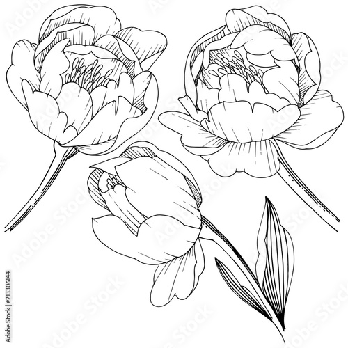 Fototapety, obrazy: Wildflower peony in a vector style isolated. Full name of the plant: peony. Vector flower for background, texture, wrapper pattern, frame or border.