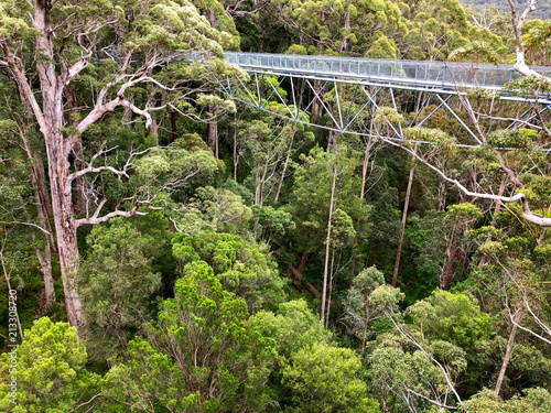 Vászonkép View of Tree Top Walk at Valley of the GIANTS at Walpole-Nornalup National Park, Western Australia