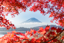 富士山・河口湖・もみ...