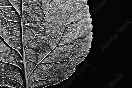 Leaf Texture Black And White Design Black Leaf Skeleton
