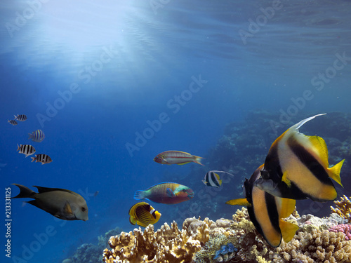 Underwater scene. Coral reef. Red Sea
