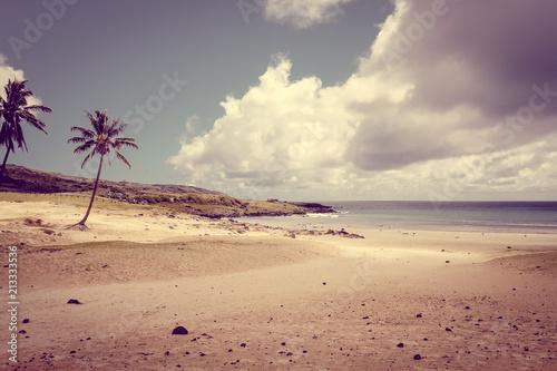 Foto op Aluminium Centraal-Amerika Landen Palm trees on Anakena beach, easter island