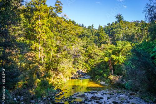 Foto op Aluminium Oceanië Cleopatra pools in Abel Tasman National Park, New Zealand