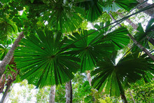 Tropical Plants In The Mangrov...