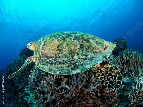 In de dag Koraalriffen タイマイ