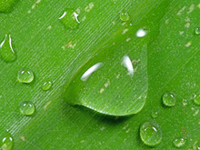 Macro Photo Of Water Drops On Banana Leaf, Nature Background
