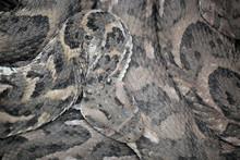 Animal Detail - Close Up Macro...