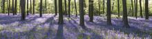 Micheldever Woods In Hampshire.
