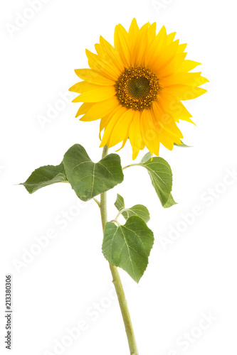 Deurstickers Zonnebloem sunflower isolated